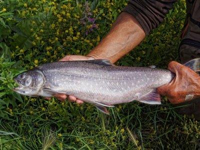 Rybí víkend ve Dvoře